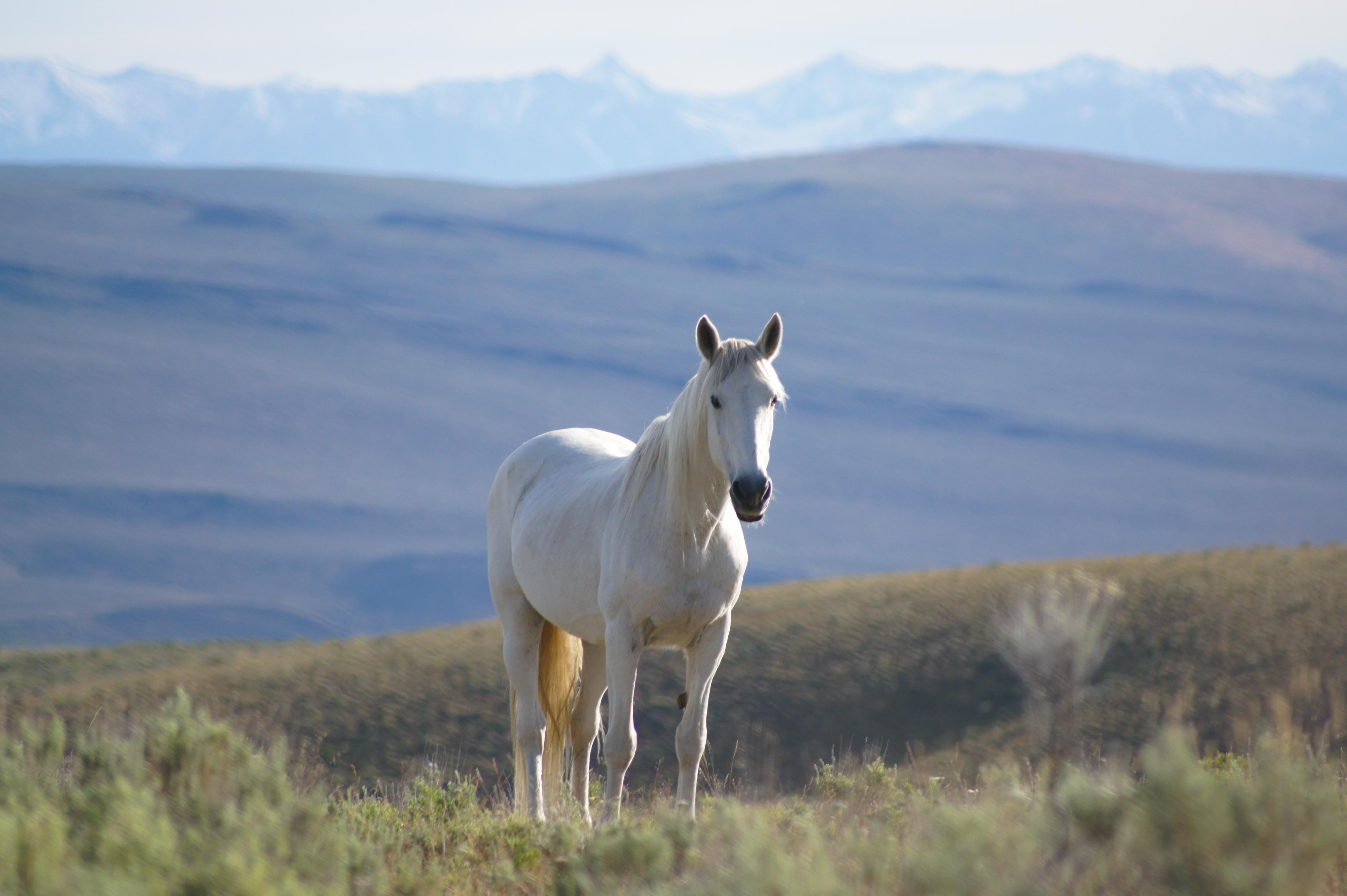 Mustang Lady_DSC05463-1.jpg