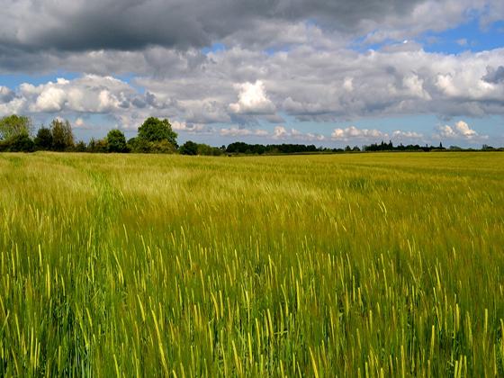 Heydon fields