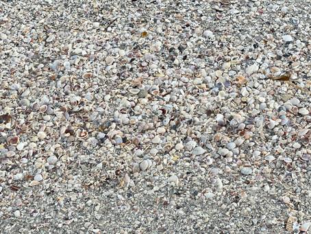 A Shell-fish Beach Walk