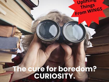 The Cure For Boredom?  Curiosity!