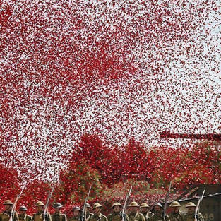 The poppies say it all