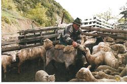 moutons2.jpeg