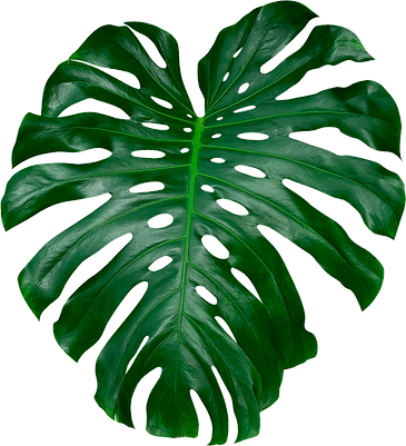 TROPICAL LEAF 2.png
