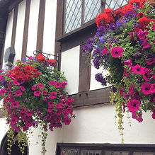 Warwick-in-Bloom-Hanging-baskets.jpg