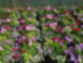 Hanging-Baskets-and-Planting-Services-Wa