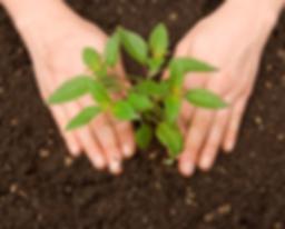 sustentabilidade - img.png