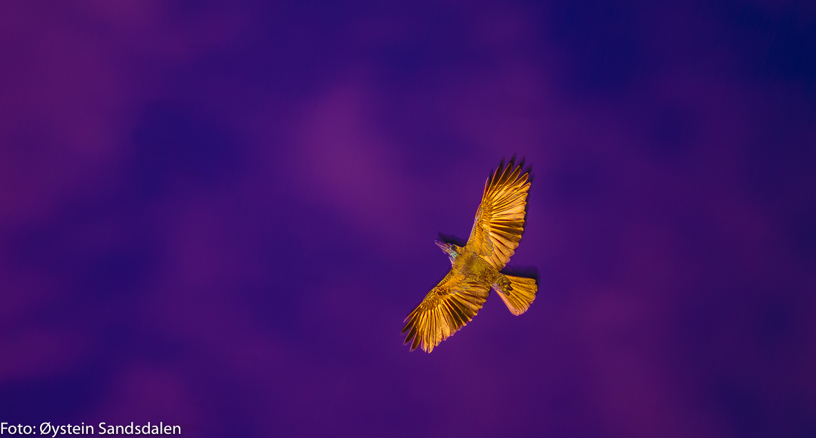 The Phoenix-5