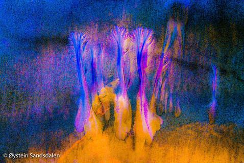 Dancing Trees 5