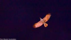 The Phoenix-4