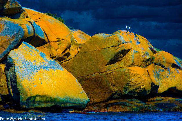 Yellow Rock 5