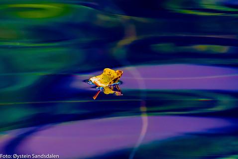Leaf in the Pool 4