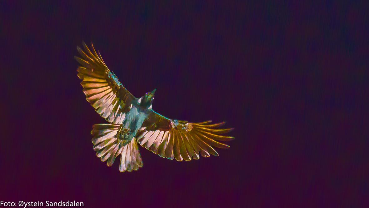 The Phoenix-3
