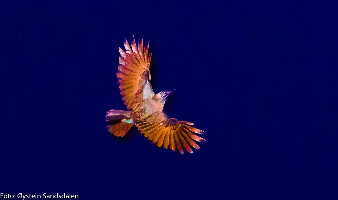 The Phoenix-1