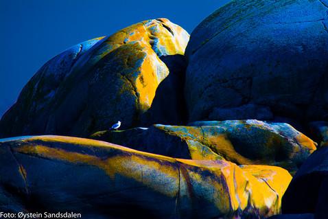 Yellow Rock 3