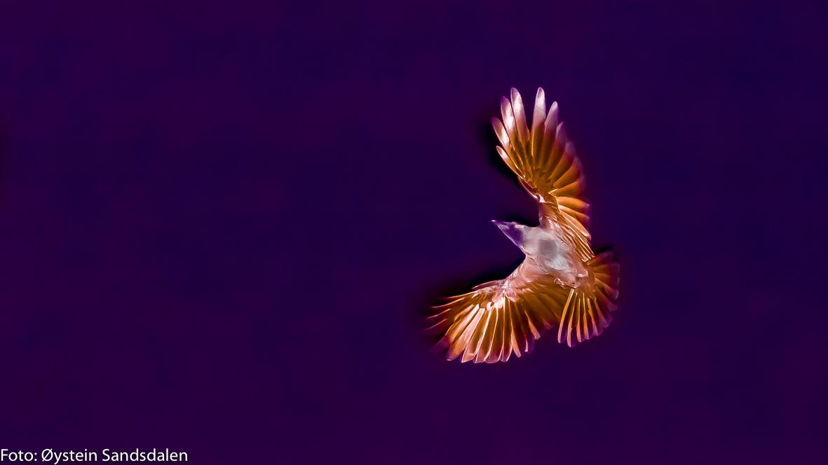 The Phoenix-2