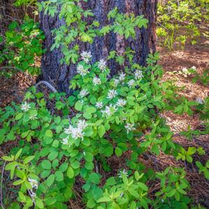 Woodland Scene near Benham Falls.jpg