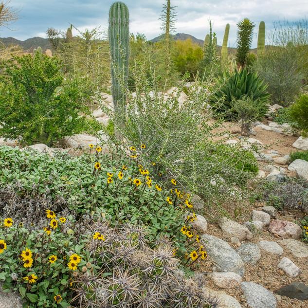 Desert Museum--45.jpg