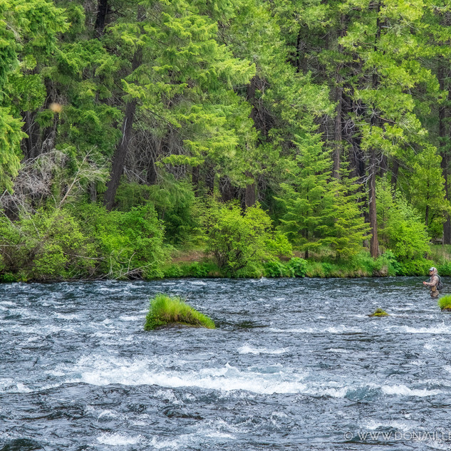 Fly Fishing on the Metolius.jpg