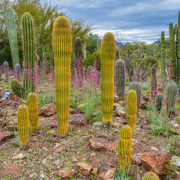 Desert Museum--42.jpg