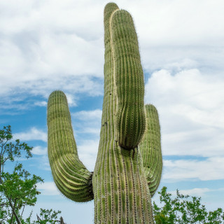 Saguaro National Park--26.jpg