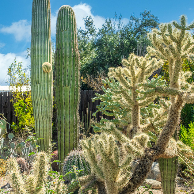Tucson Botanical Garden-.jpg