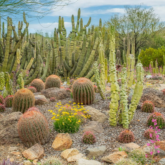 Desert Museum--66.jpg