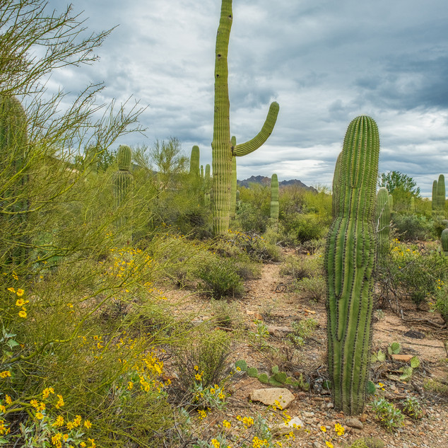 Tucson Botanical Garden--15.jpg
