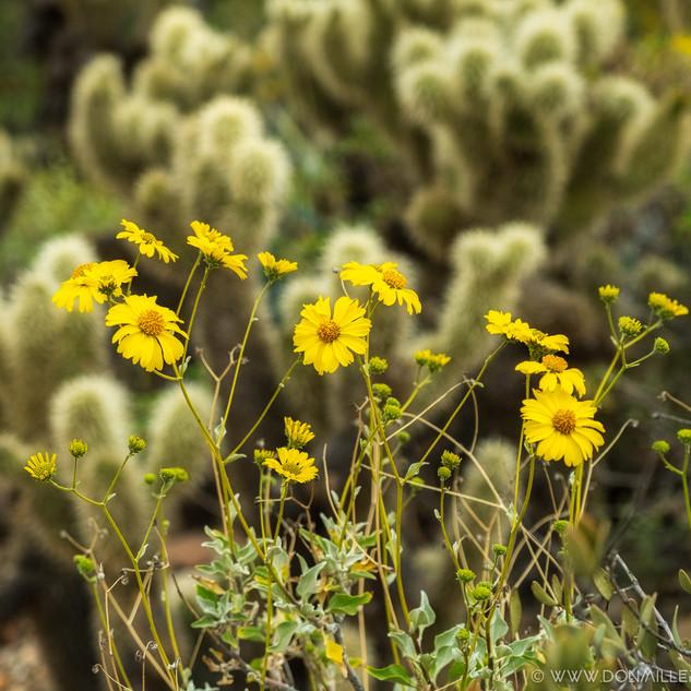 Desert Museum--53.jpg