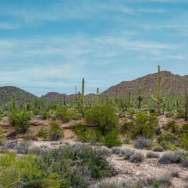 Desert Panorama-.jpg
