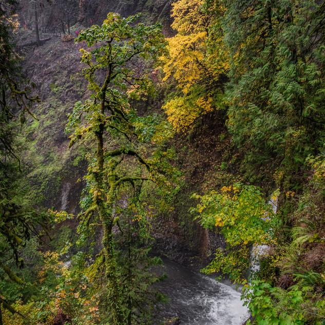 At Multnoma Falls