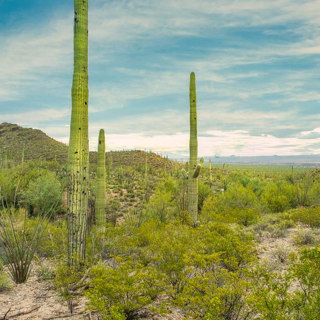 Desert Museum--55.jpg