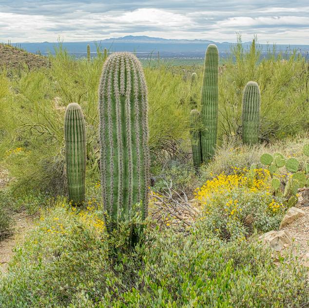 Desert Museum--46.jpg