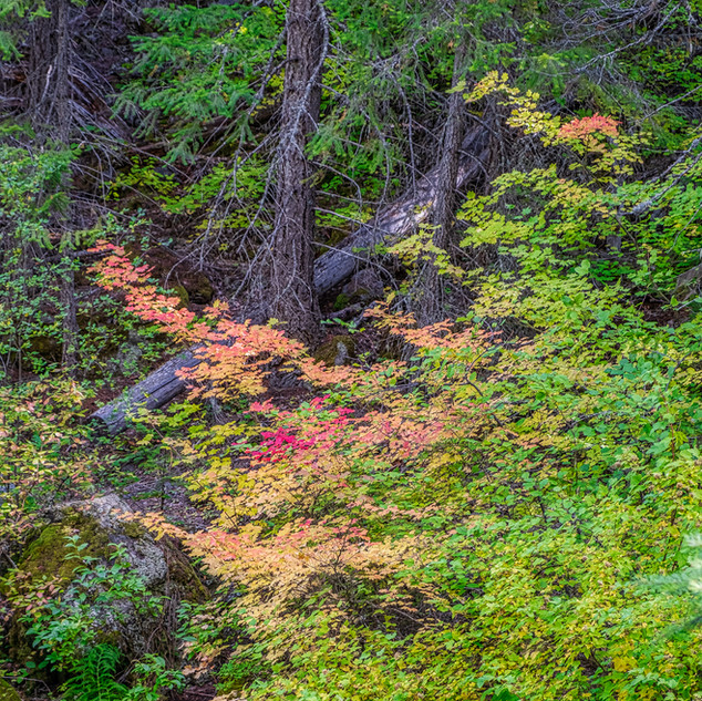 Fall Color along the Metolius River Trai