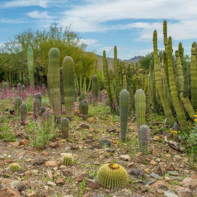 Desert Museum--68.jpg