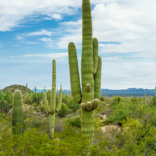 Saguaro National Park--23.jpg