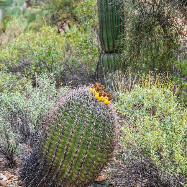 Desert Museum--52.jpg