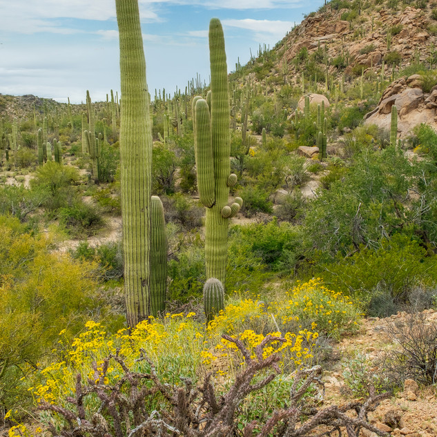 Saguaro National Park--19.jpg