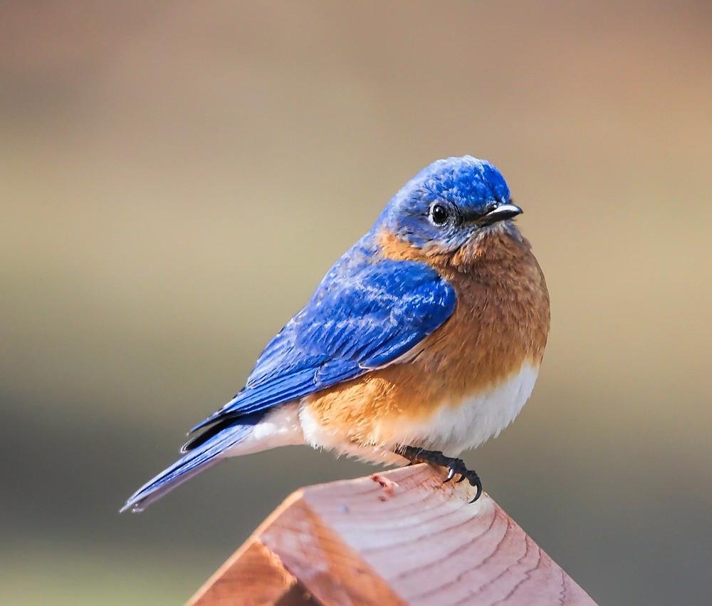 Bluebird Twitter tweet