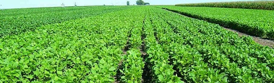 semillas, pasturas, alfalfa, sorgos híbridos, grama rhodes, brachiaria, subtropiales, gramíneas, leguminosas, rye grass
