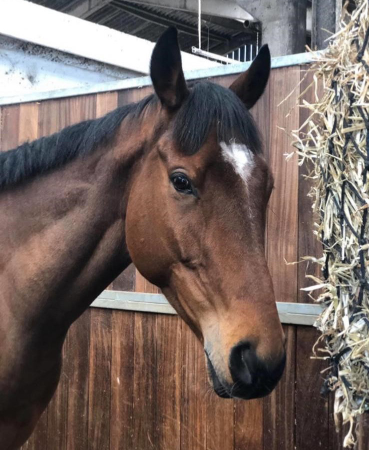 Alan Rogers Tips / Horse Shares