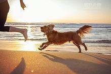 South Coast Pet Photographer .jpg