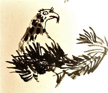 Baby Eagle.jpg