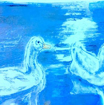 Two white ducks - sketchbook
