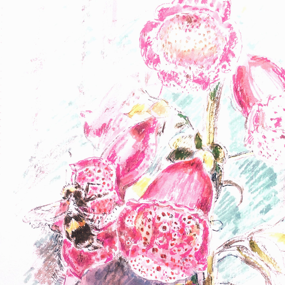 Bee on Foxgloves