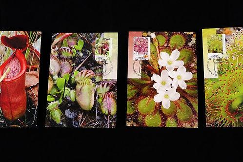 Australia Carnivorous Plants Maxi 4 card Set