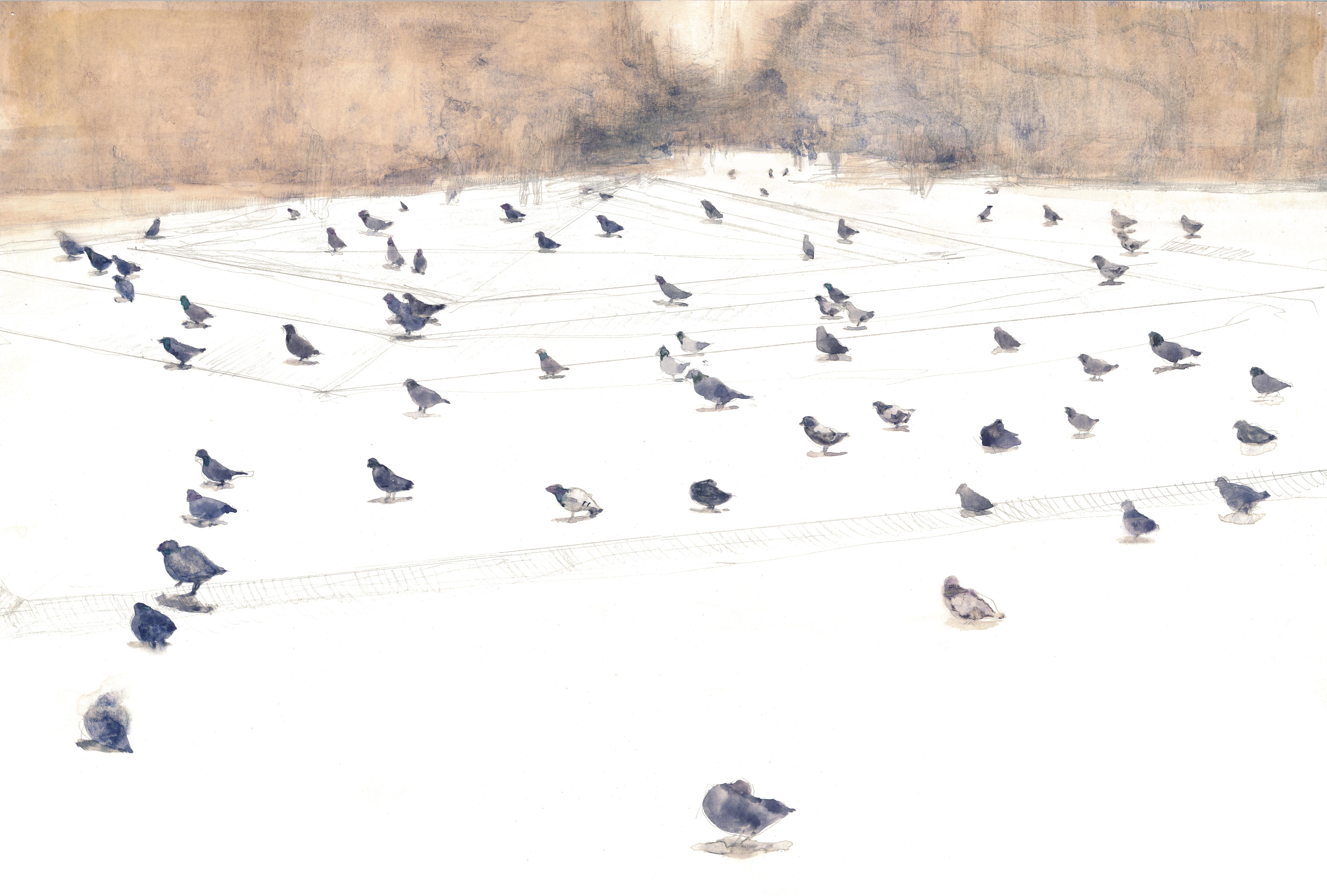 Fieldwork with pigeon