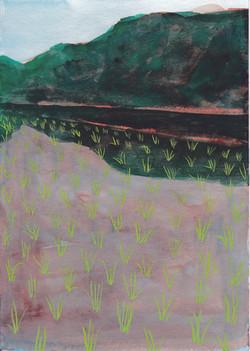 木崎湖畔の水田 / Kizaki Lakeside paddy fields