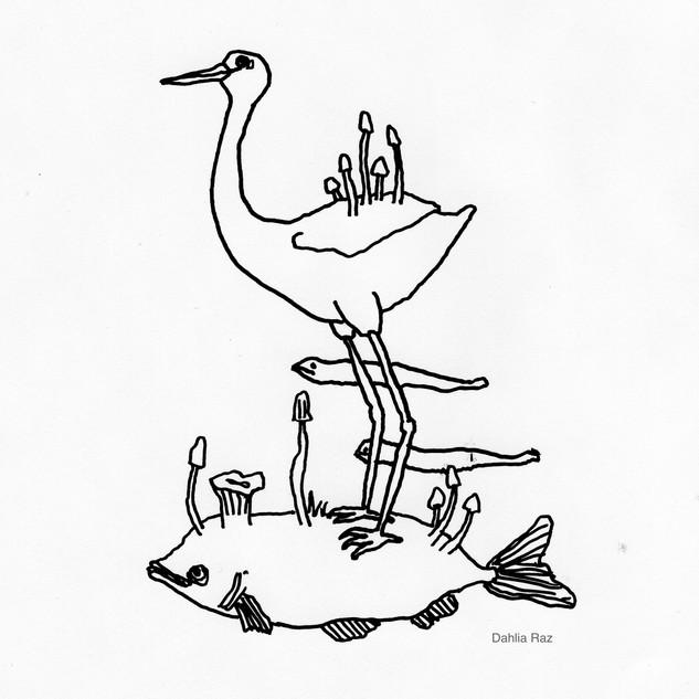 Bird on Fish