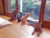 保護猫カフェ 和猫カフェ 客室