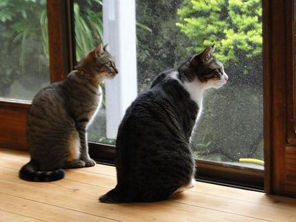 保護猫カフェ『和猫かふぇ』縁側